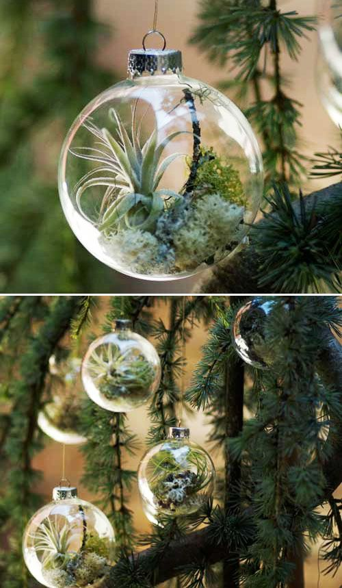 DIY Air plant ornaments. This is so cool!!! I could leave these decorations up all year!!