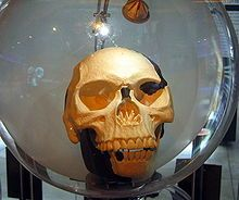 "The Piltdown Man was a hoax in which bone fragments were presented as the fossilised remains of a previously unknown early human. These fragments consisted of parts of a skull and jawbone, said to have been collected in 1912 from a gravel pit at Piltdown, East Sussex, England. The Latin name Eoanthropus dawsoni (""Dawson's dawn-man"", after the collector Charles Dawson) was given to the specimen."