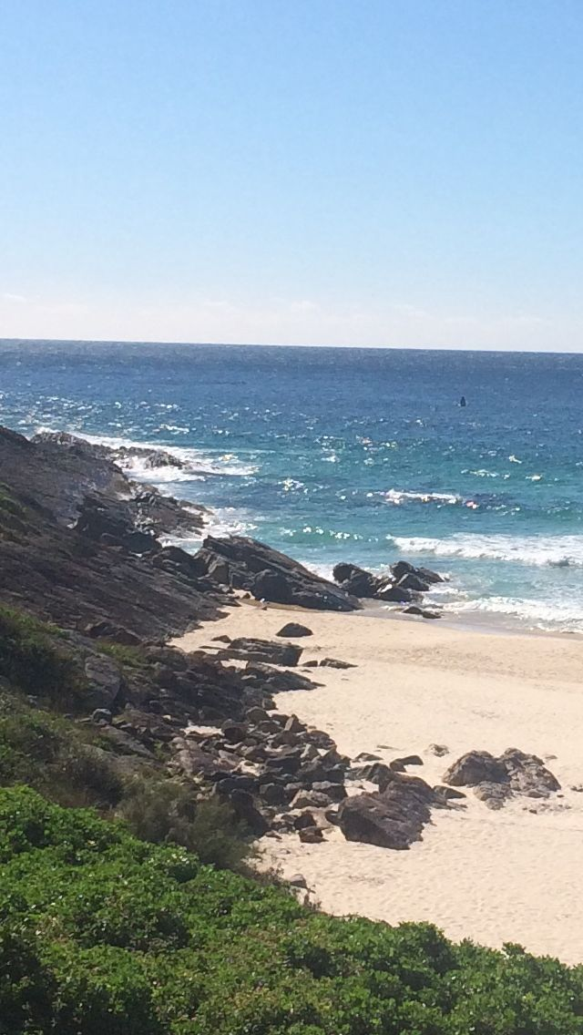 Whales at play off Blueys beach