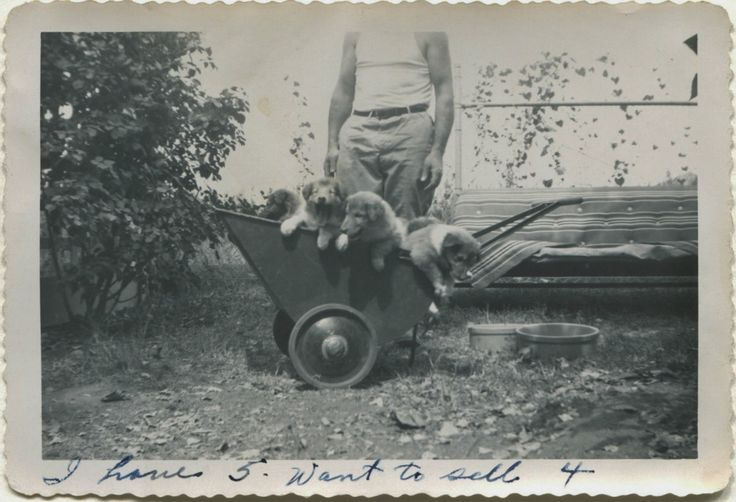 photo-ancienne-famille-vernaculaire-45