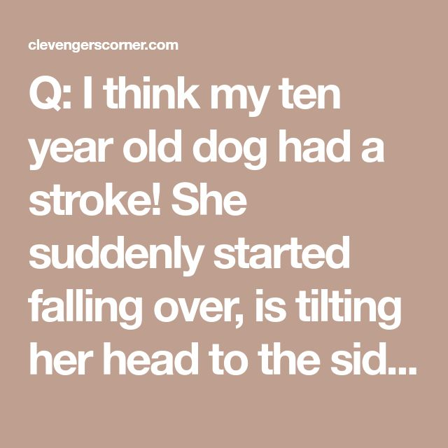 Q: I think my ten year old dog had a stroke! She suddenly started falling over, is tilting her head to the side, and her eyes are jumping back and forth. Is there anything that we can do? - Clevengers Corner Veterinary Care