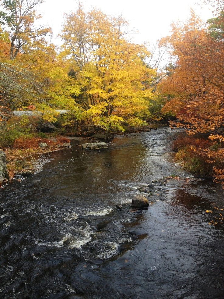 Camerons Brook Provincial Park on Kejimkujik Scenic Drive (earlier today). #novascotia #fall #fallcolours