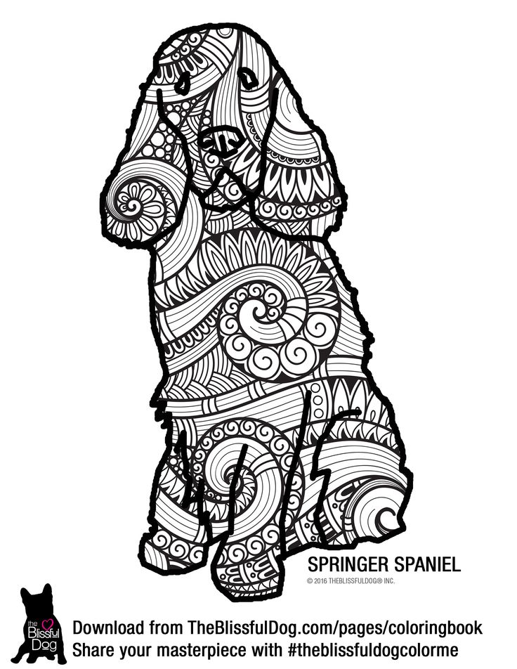 springer spaniel coloring pages - photo#34