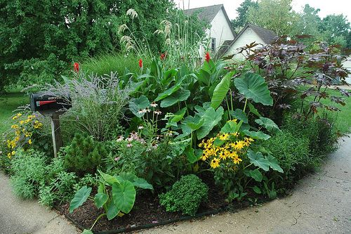 Mailbox Gardens Boost Curb Appeal: Summer Annuals Lend Tropical Appeal