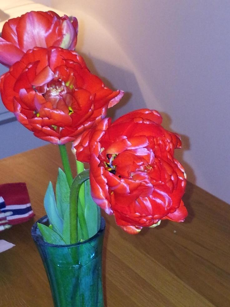 Lovely tulips from the garden!