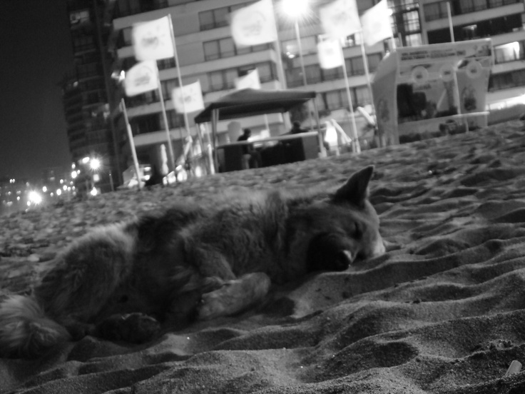 Chilean homeless dog (they're named 'Quiltro' in chilean), taking a nap on beautiful Viña del Mar beach at night