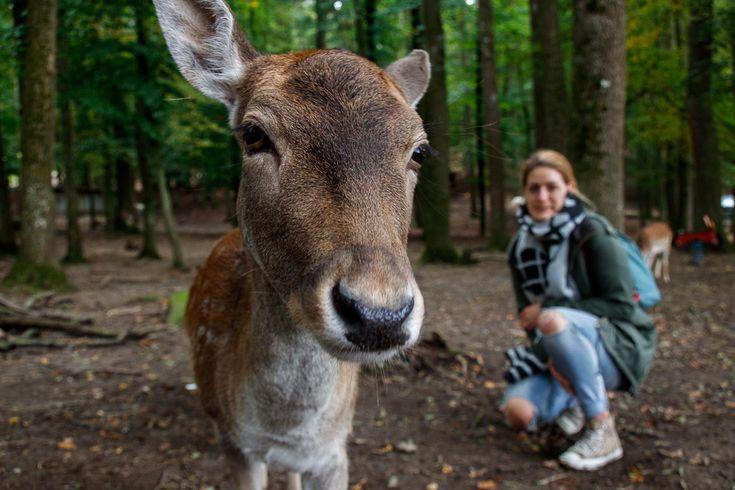 Wildpark Bretten Baden Württemberg Deutschland Wochenende Ausflug Rehe Tiere Urlaub Travel