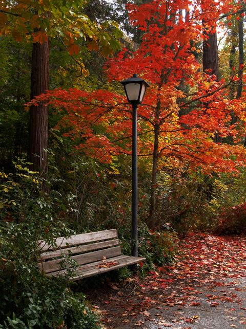 Lithia Park, Ashland Oregon - Aaron Clanton 10/2007 ©
