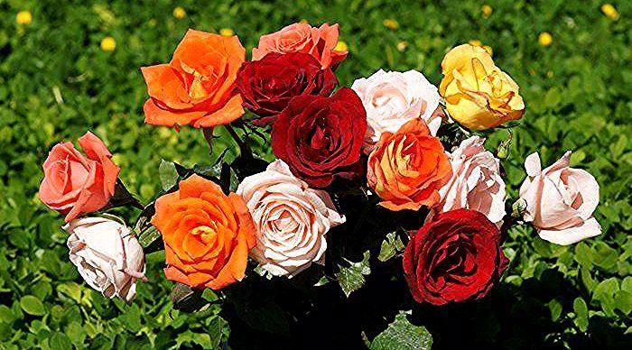 Gambar Bunga Mawar Tulisan Tangan Bunga Mawar Merah Tato Bunga Mawar Di Tangan Vanes Kamu Sering Dapat Bunga Mawar Rose Wallpaper Flowers Beautiful Roses