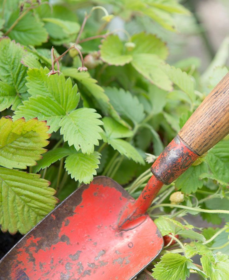 Wild Backyard Herbs : 1000+ images about The Herb Garden on Pinterest  Gardens, London and