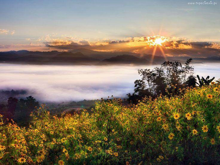 Góry, Chmury, Wschód, Słońca, Polne, Kwiaty