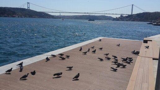 Güvercin ler