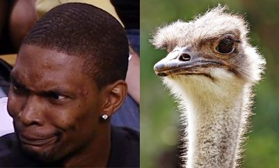 animals that look like celebrities Chris Bosh NBA Miami Heat Ostrich
