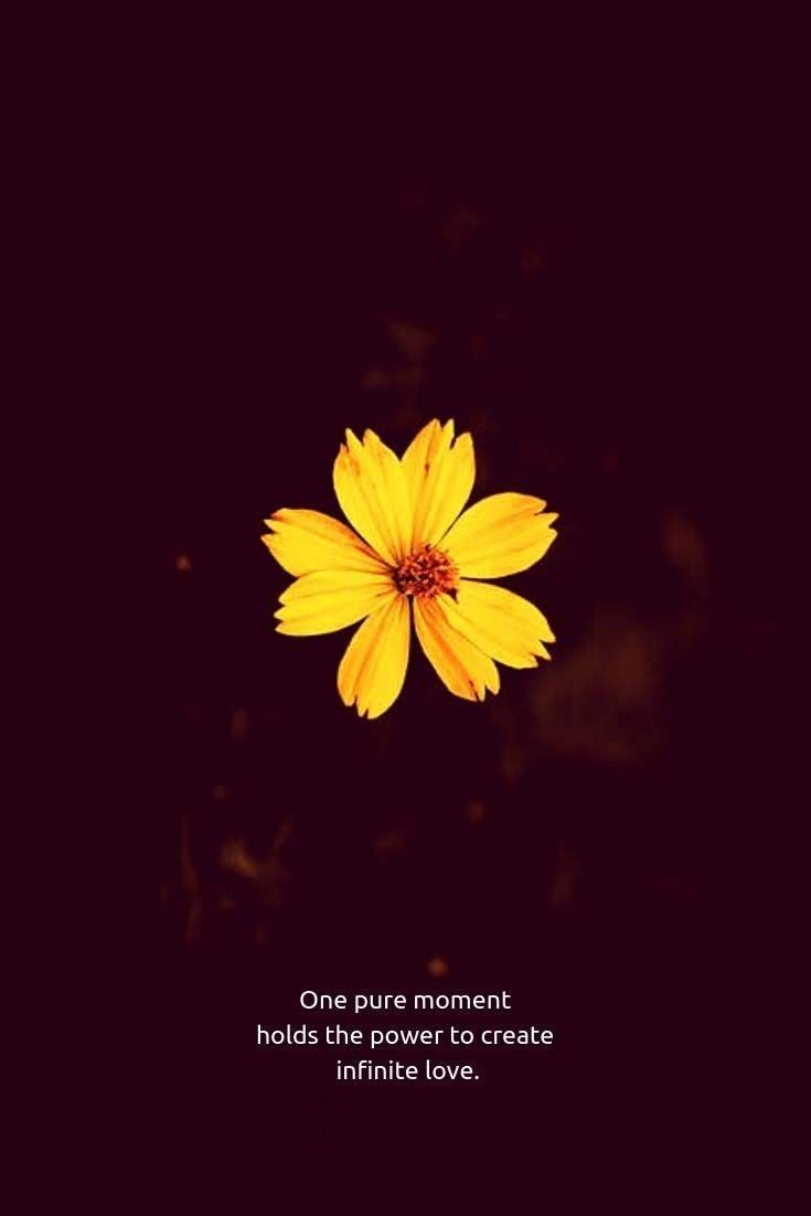 Pin about Flower quotes love and Flower quotes on 7