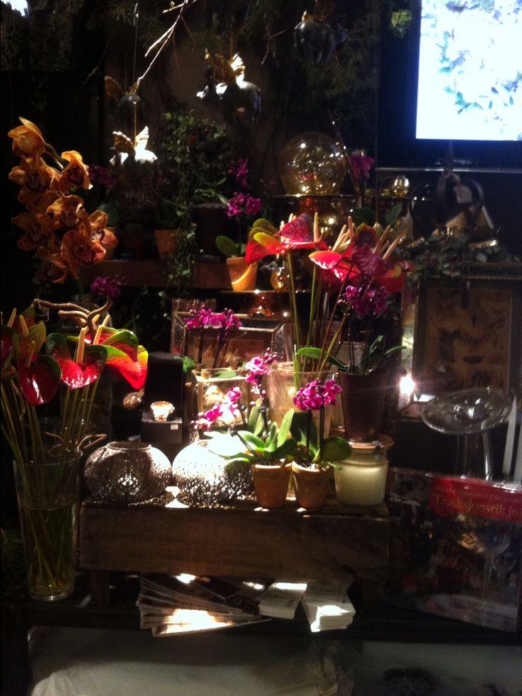Sette ut orkideer i butikken