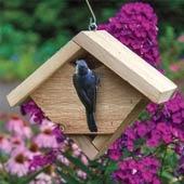 Little Songbird House