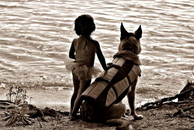 German Shepherd Dog | R. Derrick