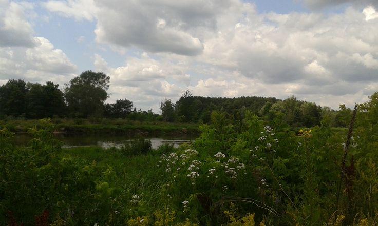 Mielnik , Bug meadows