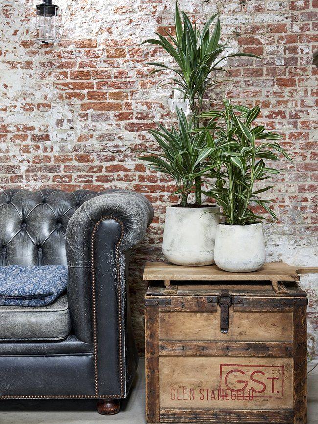 542 besten \WOHNEN Bilder auf Pinterest Zimmerpflanzen - wohnideen von privaten