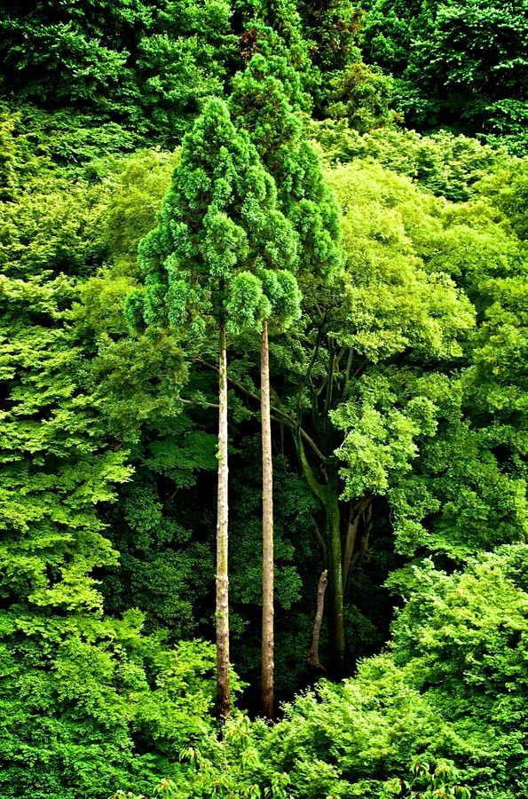 Twin trees in Kyoto, Japan hip hop instrumentals updated daily => http://www.beatzbylekz.ca