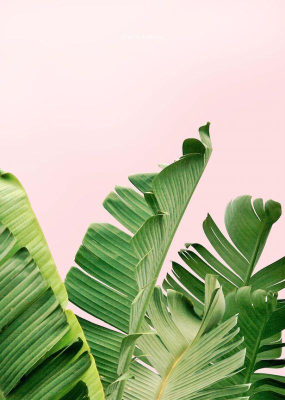 Banana Leaf Print, Leaf Print, Palm Leaf, Tropical Poster