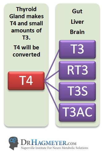 www.DrHagmeyer.com A healthy thyroid produces the following hormones: T4, T3, T2, T1 and calcitonin. T4, is the inactive form of the hormone and the most abundant, and must be converted to T3, the active hormone. But there's another Thyroid hormone produced by the thyroid called RT3 or Reverse T3. It comes from the conversion of the storage hormone T4. While its…