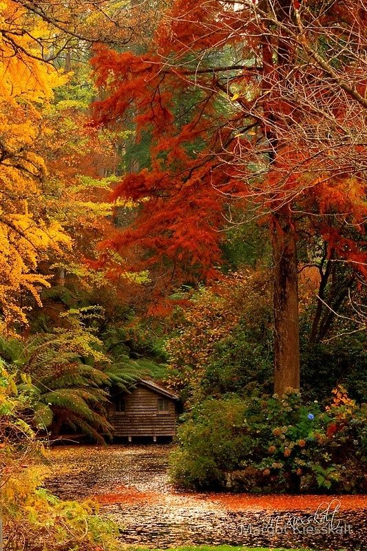 Beautiful cabin in the woods fall colors.