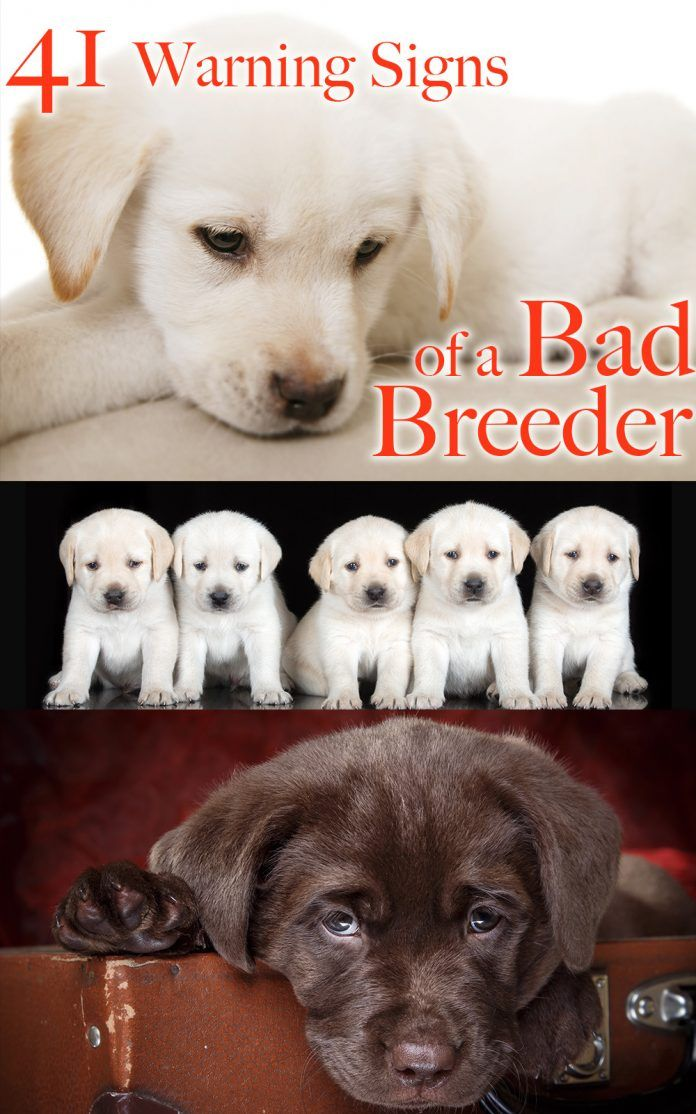 How to spot a bad dog breeder