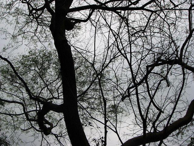 Weird Tree Art (Neural Network!) | Flickr - Photo Sharing!