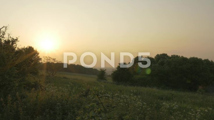 4K Woodland Trees Countryside At Dusk Sunset Lens Flare - Stock Footage | by RyanJonesFilms