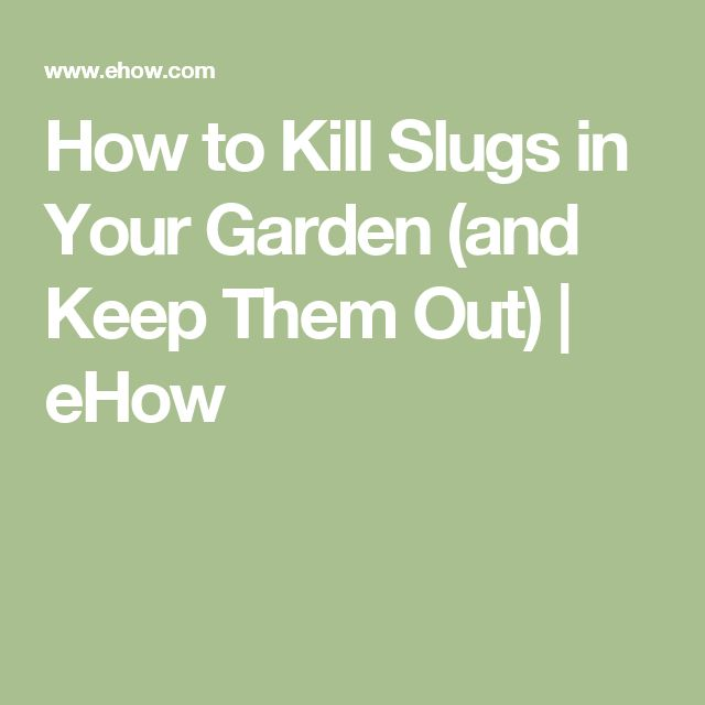 Best 25 How To Kill Slugs Ideas On Pinterest Getting