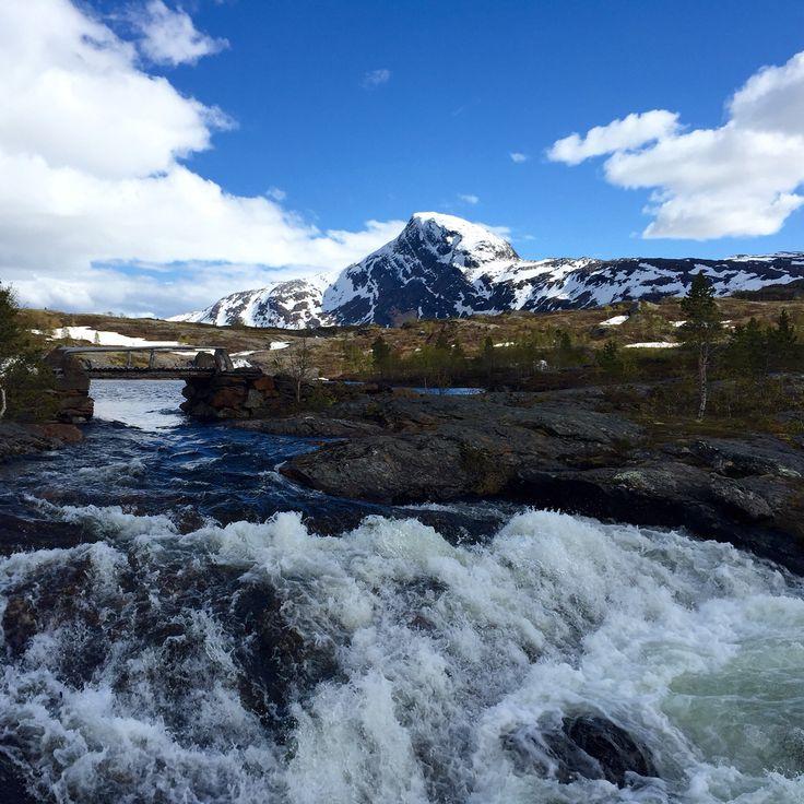 Ramskjell, Beiarn #North Norway