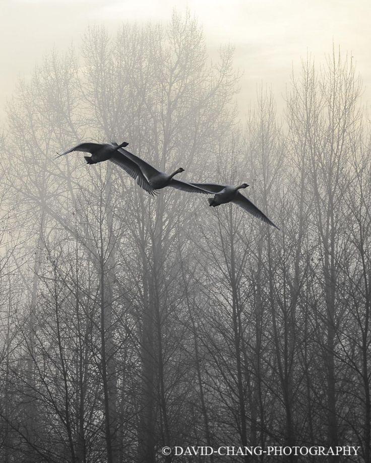 3 amigos over the Cowichan River