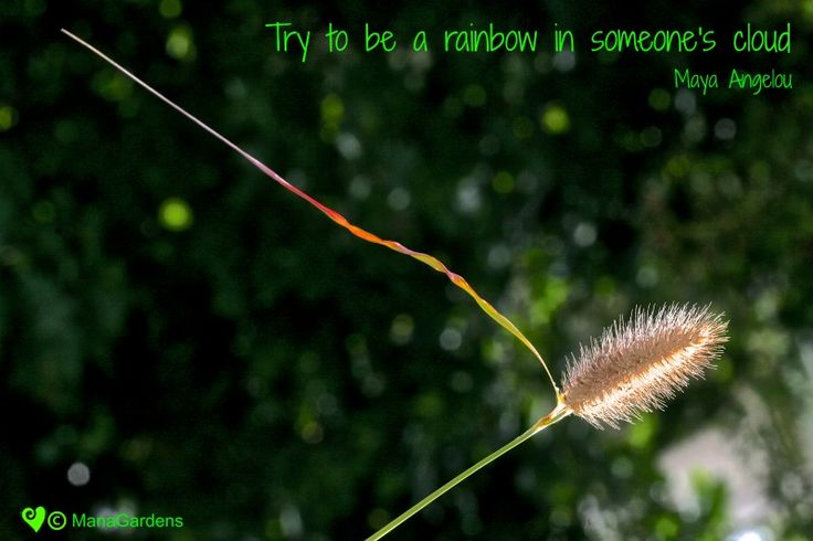 Try to be a rainbow in someone's cloud - Maya Angelou Image copyright of Eimear Moran @ManaGardens