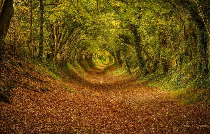 The Tunnel Near Halnaker, England By Colin Michaelis