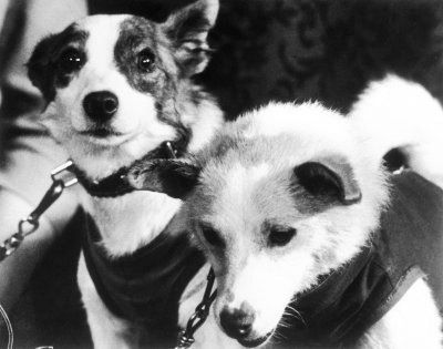 On November 3rd, 1957 the first animal in orbit was Laika, the Russian space dog. She flew aboard Sputnik 2 and died during the flight. The Soviets flew 10 more dogs on that program until April 12, 1961 when Yuri Gagarin became the first man in orbit. (Belka and Strelka were the first mammals to be successfully returned to the Earth after orbital flight in 1960.)