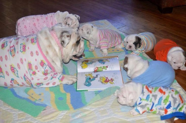 "❤ ""Once upon a time, there was a mama bully with wee little pups .....""  ❤ Posted on Bulldog Pics"
