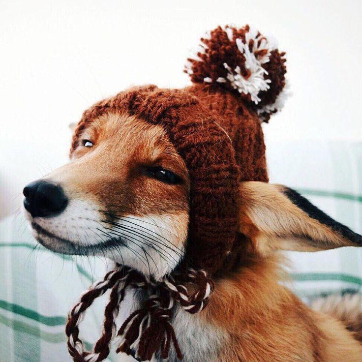 картинки шапок животных оформление