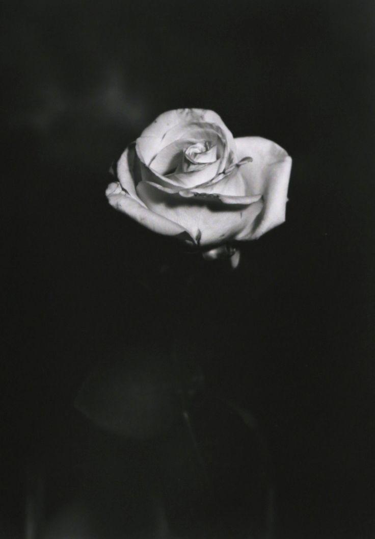 In vendita su Livin'art / Sezione Fotografia ROSA 2  Fotografia realizzata con Banco Ottico  Cm 14x9,5 montata su passepartout professionale cm 50x35  Tecnica di stampa: lastra a contatto su carta baritata ILFORD - Tiratura 10