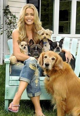 Denise Richards and her dogs. Looks like a Yorkie mix in there. :-)