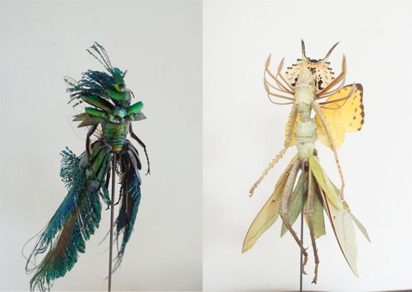 Fairy insects Art