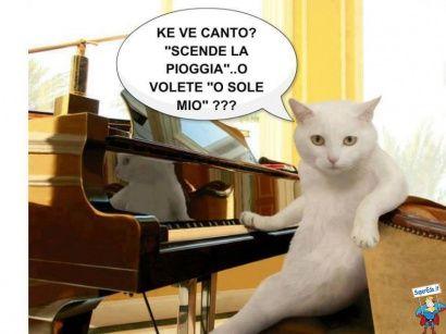 foto gatti 319