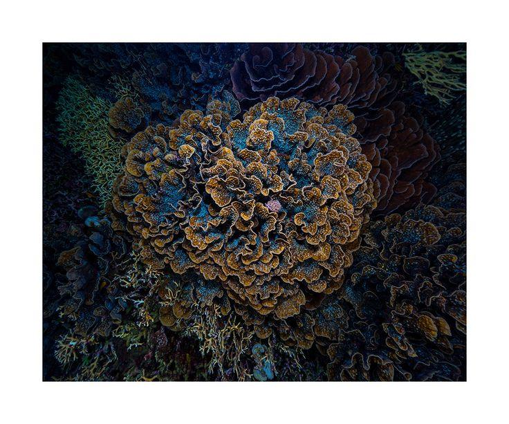 Bilikiki Solomon Islands