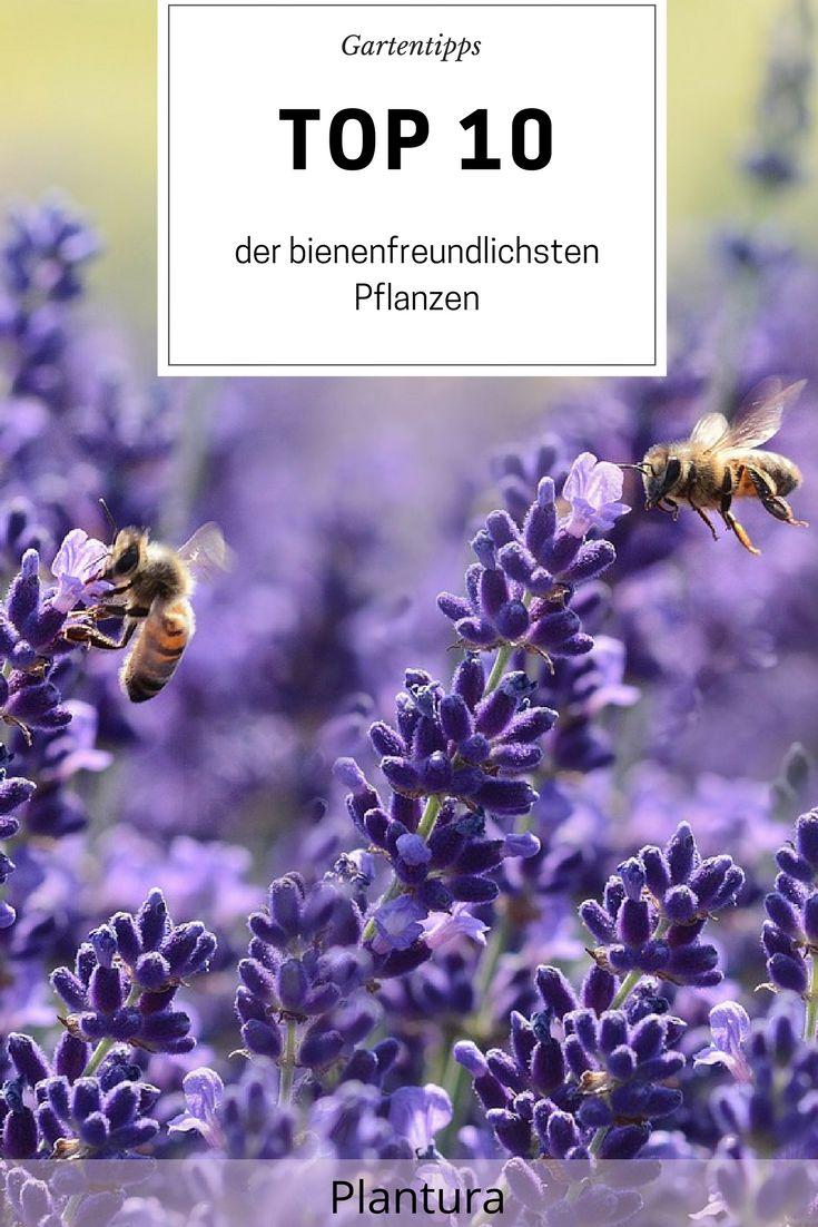 Top 10 der bienenfreundlichen Pflanzen (Übersicht) – Plantura   Garten Ideen & Tipps   Gemüse, Obst, Kräuter