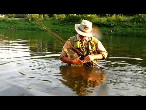 Carpas fly fishing
