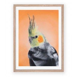 Cockatiel by Geoffrey Carran - Art Prints for Sale - Online Art Australia