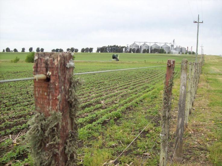 Se consolidó baja generalizada de superficie agrícola uruguaya