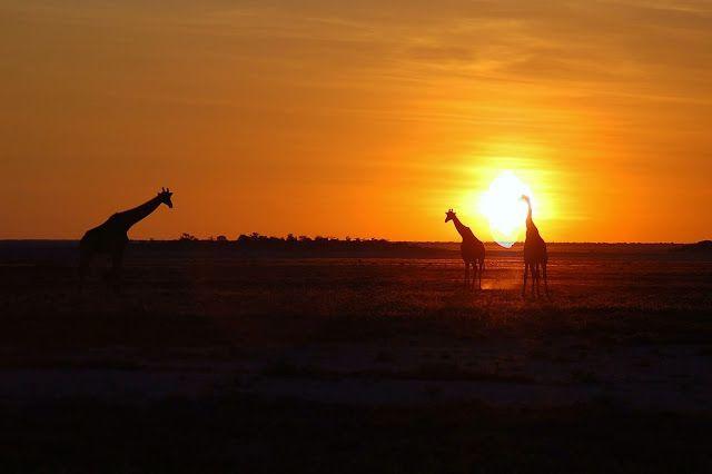 Etosha National Park (Namibia)