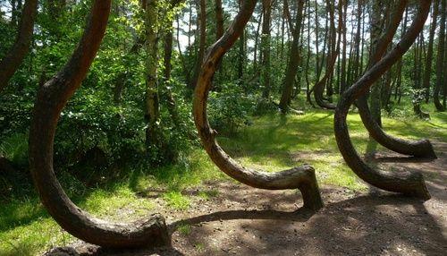FORUM DE LA TAVERNE DE L'ETRANGE :: Forêt hantée de Transylvanie surnommée le «triangle des Bermudes» roumain: Hoia Baciu