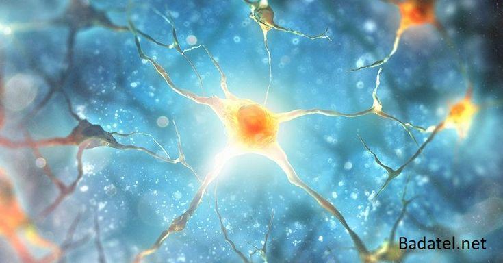 Ľudské telo je schopné regenerácie, keď mu dodáte vhodnú výživu. Zistite, aké tkanivá sa dajú úplne zregenerovať pomocou týchto potravín.